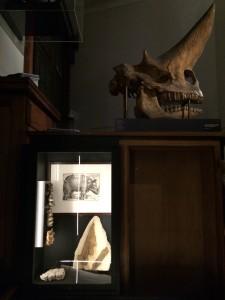 Robbert Dijkgraaf, Teylers Museum (Haarlem) en Museum Boerhaave (Leiden)